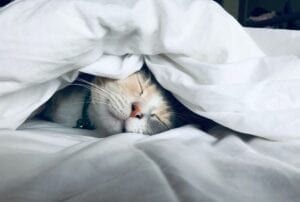 A cute cat face buried beneath a quilted sheet.